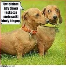 Haha, jakie te psy myśli mają xD