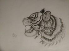 mój tygrys