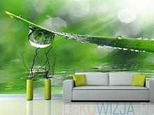 Fototapeta Świeży liść trawy z kroplą wody