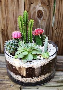 kaktusy ^^
