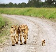 Rodzinny spacerek