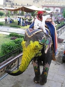 Indie, słoń