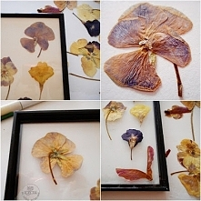 Suszone liście i kwiaty
