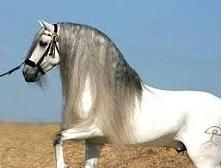 Ah... Te konie... Takie piękne....