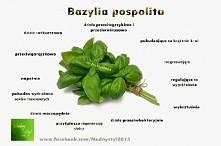 Bazylia!