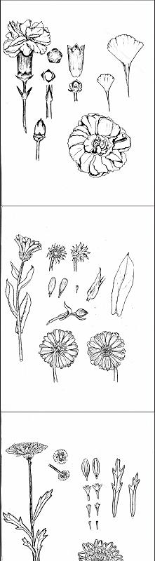 Kwiaty rysowane cienkopisami