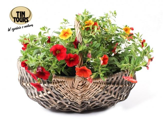 Biały wiklinowy koszyk na kwiaty ładnie ozdobi każde miejsce w domu i na balkonie.