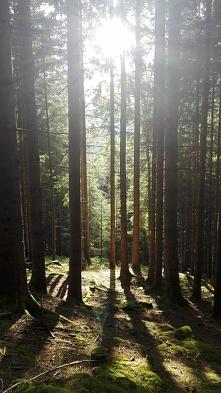 Nie było nas był las. Nie będzie nas będzie las.