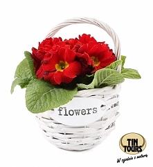Biały koszyk wiklinowy na kwiatki