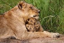 Mamusia przytuli
