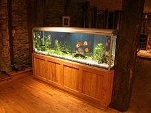 Akwarium słodkwoodne