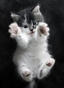 taki mały przytulasek :) Kto chce się przytulić?:)