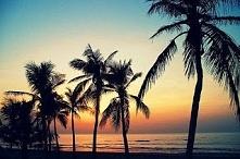 Uwielbiam palmy <3 a Wy ...
