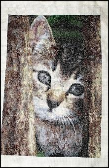 Haft krzyżykowy - kot