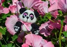 Pani panda