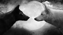 wolfs, moon light