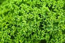 Jarmuż. Król wśród liściastych warzyw. Nie tylko dekoracja. To źródło witamin i składników odżywczych!