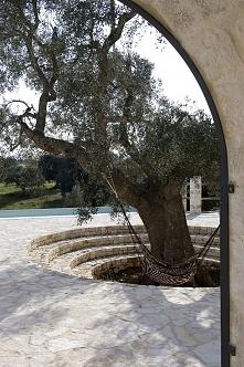 Trochę roślinności w kamiennym dziedzińcu włoskiej willi - nietypowe drzewo, ...