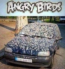 Angry Birds *.*