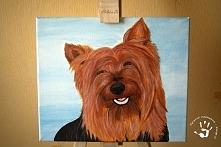 Portret psa na podobraziu.