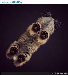 Kotełek :)