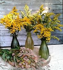 kwiaty z naszej łąki