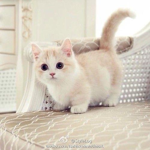 """jakieś porady dla """"świeżych"""" właścicieli małych kotów?"""