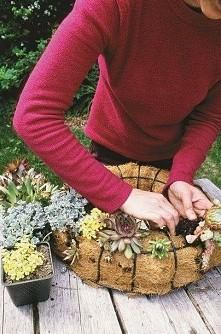 wieniec ozdobny z kaktusów DIY