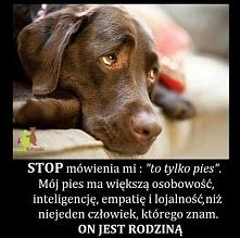 Pies to członek rodziny!