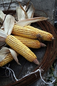 Kukurydza - właściwości i w...