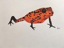 Żaba, przerysowywana z zdj,...