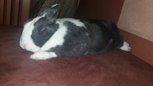 królik padł i śpi razem z w...