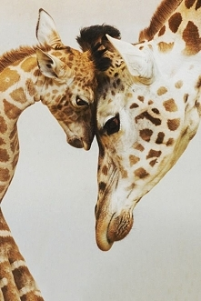 Żyrafa z mamusią