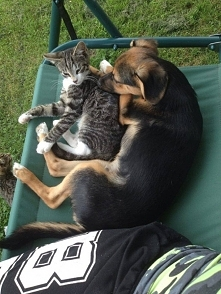 Jak pies z kotem :P