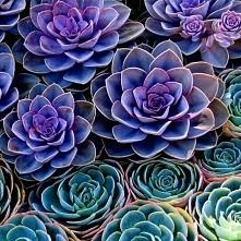 Rośliny jak z innej planety.  Wystarczy dodać łyżeczkę barwnika spożywczego do 250 ml wody. pozostawić na 24 godziny i gotowe. Jeśli kolor będzie mało intensywny powtórzyć czynn...