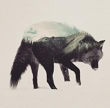 Wilk w ciekawym wydaniu.