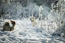 zimowa porą