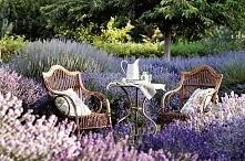 W takim ogrodzie bym posied...