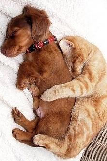 Sweet puppy & cat