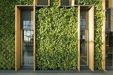 Zielona ściana, ściana we wnętrzu, zieleń we wnętrzu, drewno z zielenią, nowo...