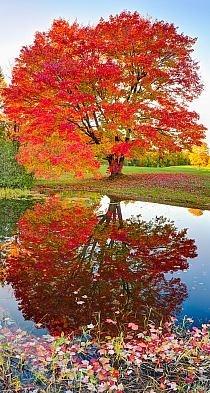 Pięknie uchwycona chwila i te kolory ....