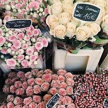 Róże, wszędzie róże...