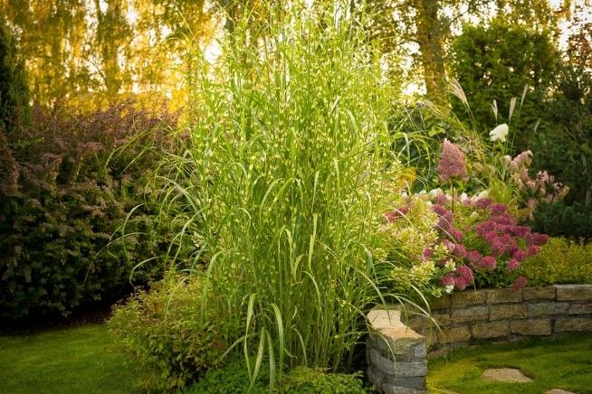 """Dziś ten przepiękny ogród mogłam podejrzeć w """"ciągłości"""" - był w programie Maja w ogrodzie. Jeszcze piękniejszy niż na zdjęciach :) Ogród w cieniu brzóz/ Brzozowy ogród."""