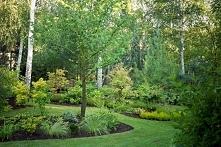 Znowu Ogród w cieniu brzóz... przyjemnie, błogo, zielono...