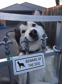 Uwaga, zły pies. Zabija pozytywną energią :)