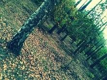 las jesienią...coś pięknego