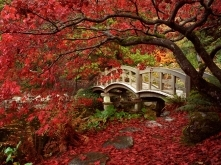 #10 Jesień w Japonii
