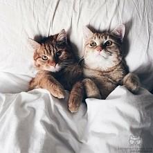 ^cats=*=