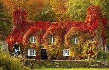 domek w lisciach - jesien