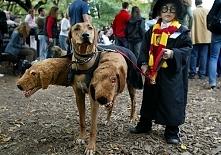 Harry i Cerber :)